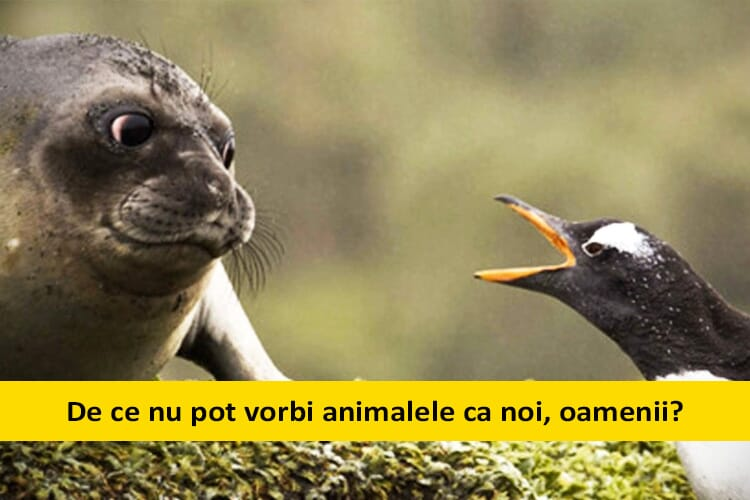 copiii-intreaba-animalele-vorbesc